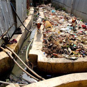 Solid waste in Mirpur, Dhaka